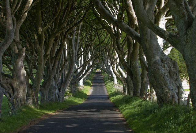 small-Dark Hedges 1e